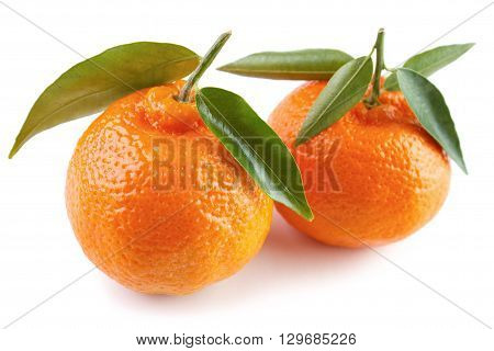 Two ripe clementines with green leaves white background