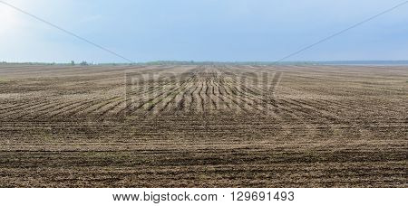 Fallow field after winter against cloudy dark blue sky