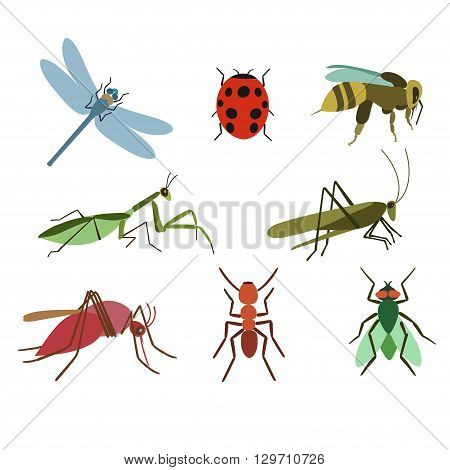 Set of vector insects. Collection Insect of gnat ant fly bee mosquito dragonfly beetle ladybug mantis grasshopper. Insect  isolated on white background.