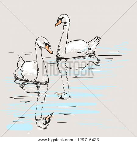 Sketch of couple of swans with reflection on water, Hand drawn illustration