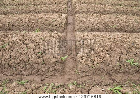 cultivated field ready for sowing horizontal composition