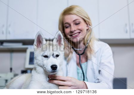 A woman vet examining a dog at medical office
