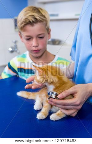 Close up of woman vet examining kitten with a little boy at medical office
