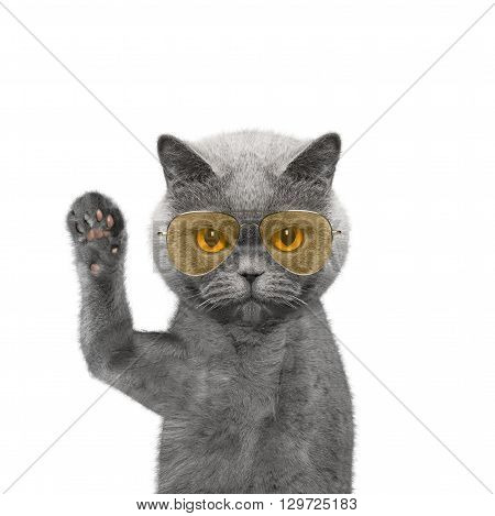 Cute cat in glasses is greeting you -- isolated on white
