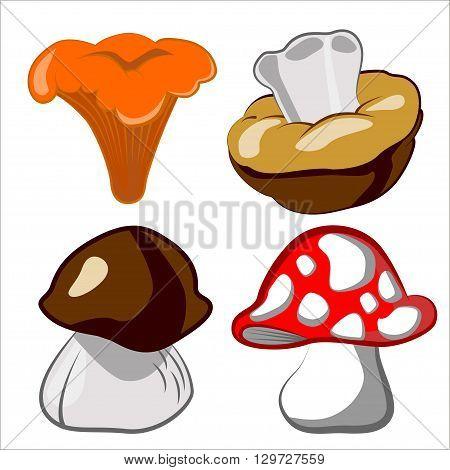 Vector cartoon illustration of mushrooms. Boletus edulis chanterelle mushroom boletus. Network of sdobnyh yadoaityh and mushrooms