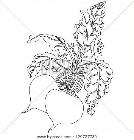 Beetrootes With Leaves vector black hand drawn illustration radish or beets beet vegetable cartoon illustration.