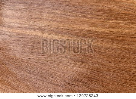 Background of long, smooth, well-groomed brown hair