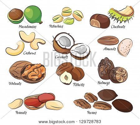 Collection of different nuts vector illustration. Healthy nutrition and vitamin concept. Heaps of different nuts, walnuts, cashews, almonds and others isolated on white background