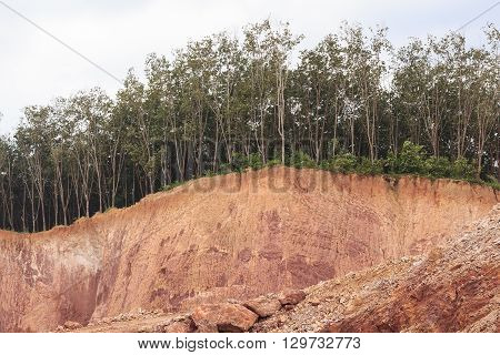 Tree and section of soil under condition of the erosion as the cliff by human