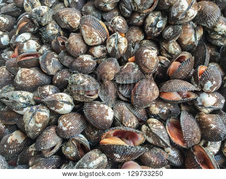 Fresh raw cockles background at market in Thailand