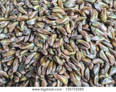 Raw fresh horse mussel or Musculus senhousia background at market in Thailand