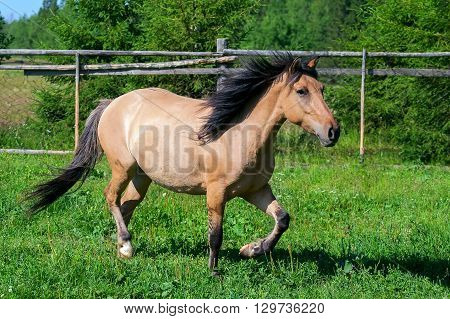 Beautiful brown horse on pasture in the summer