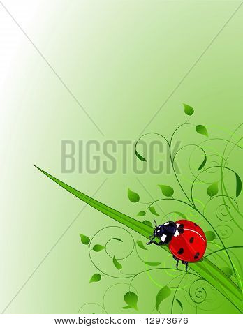 Green Background With  Ladybug