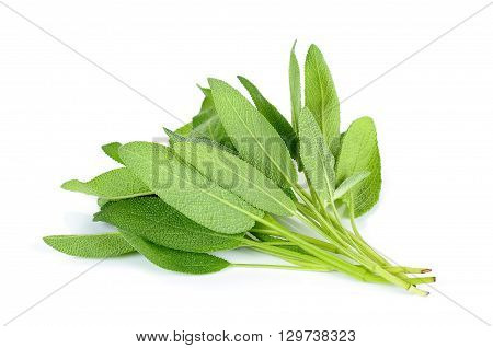 Bundle Of Sage Leaves On White Background