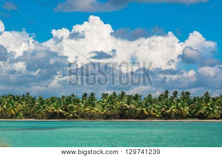 Palm trees on sea shore at beautiful sunny day. Image of tropical vacation and sunny happiness.