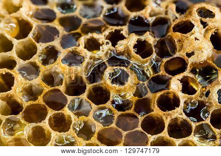 Nature food background concept closeup natural beehive