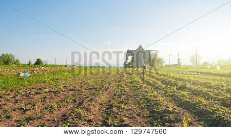 scarecrow in field under blue sky. Close up