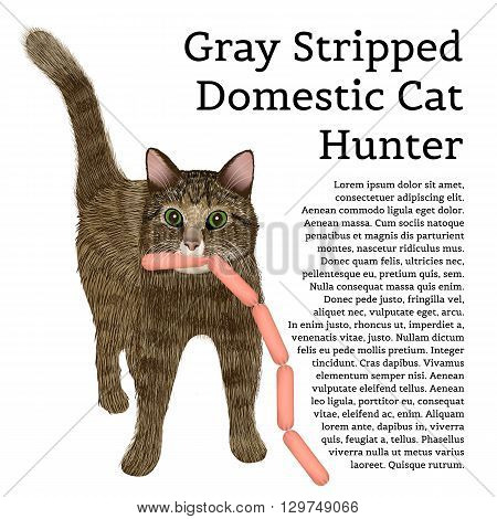 Gray stripped domestic cat with sausages. Cats of different colors. Cat hunter. Isolated object with text frame. Vector illustration on a white background.