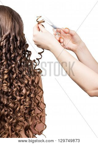 Barber trims tresses girl with long curly hair isolated on white background.
