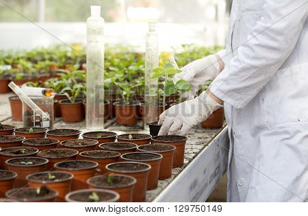 Biologist With Sprout And Test Tube