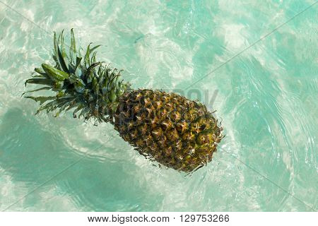 Pineapple floating in a turquoise Caribbean beach