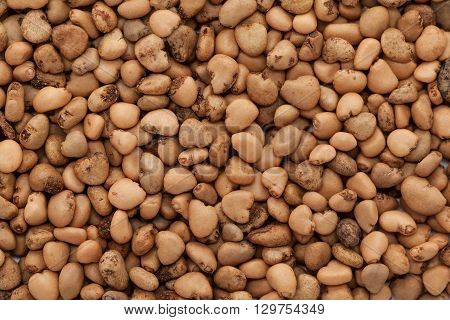 Organic Indian Guava (Psidium guajava) seeds. Macro closeup background texture. Top View.