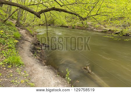 A river in the woods in the woods during spring.