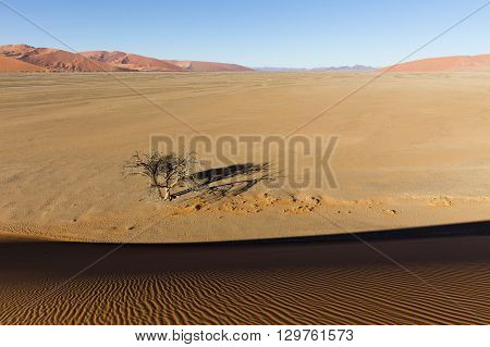 View from the dune 45 in the Namib Desert Sossusvlei in the Namib-Naukluft National Park of Namibia