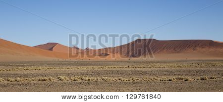 Red dunes in the Namib Desert in Sossusvlei in the Namib-Naukluft National Park of Namibia