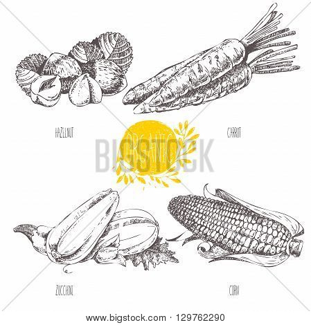 Series - vector fruit, vegetables and spices. Hand-drawn illustration in vintage style. Sketch. Healthy food. Linear graphic. Set of carrot, corn, squash, zucchini, hazelnut, filbert