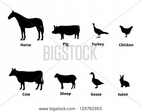Vector illustration silhouettes set of livestock. Farm animals with the inscription. Isolated on white background. Infographics domestic cattle.