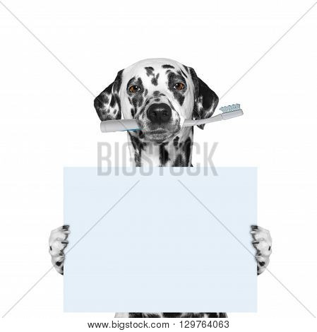dog holding a toothbrush and blank -- isolated on white