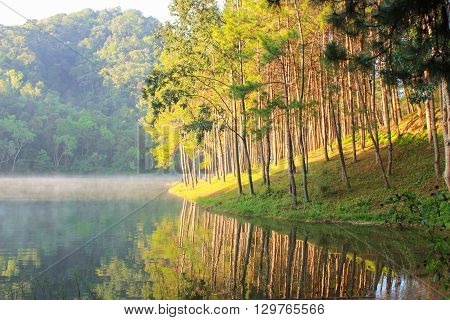 Beautiful pine forest in riverside and lake