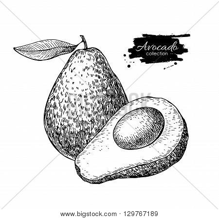 Vector hand drawn avocado and sliced pieces set. Tropical summer fruit engraved style illustration. Detailed avocado food drawing.