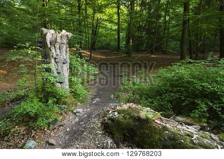 Forest Trail And Tree Fungus