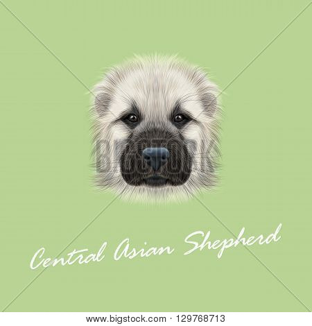 Vector Illustrated Portrait of Central Asian Shepherd Dog. Cute fluffy white face of young domestic dog on green background.