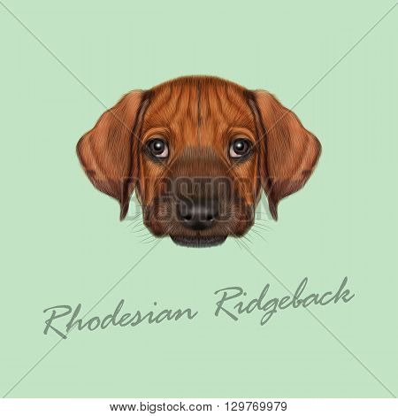 Vector Illustrated Portrait of Rhodesian Ridgeback dog. Cute orange face of domestic puppy on green background.