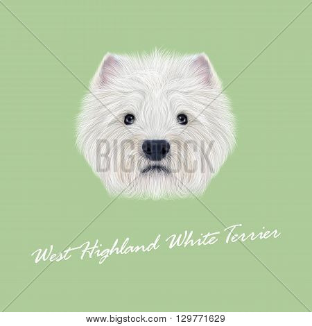 Vector Illustrated Portrait of West Highland White Terrier. Cute fluffy white face of domestic dog on green background.
