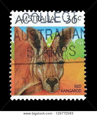 AUSTRALIA - CIRCA 1986 : Cancelled postage stamp printed by Australia, that shows Red kangaroo.