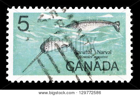 CANADA - CIRCA 1968 : Cancelled postage stamp printed by Canada, that shows  Narwhal.