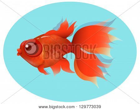 goldfish, red fin and tail, gold squama on blue background