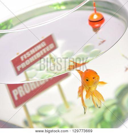 Goldfish in aquarium isolated on white background