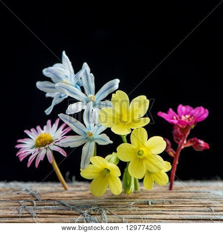 several spring garden flowers on wood and black background