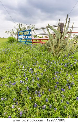 Bluebonnet Field And Texas Flag Gate In Countryside Of Ennis, Tx.