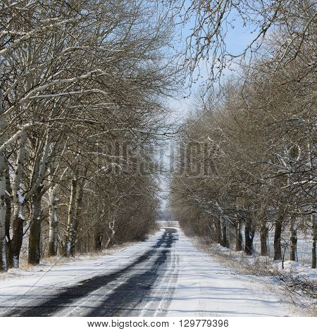 road covered with snow rural landscape sunny day