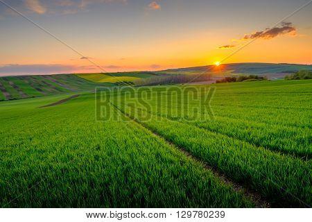 Green field at beautiful sunset at South Moravia, Czech Republic