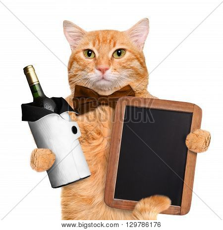 Red Cat is holding a bottle of wine. Isolated on white.