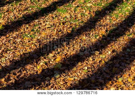 harsh shadows on the background of fallen leaves in autumn forest