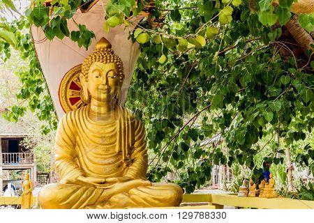 Buddha image sitting under Bodhi tree in temple thailand