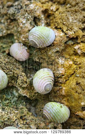 Group of small snails on stone on sea beach. Macro
